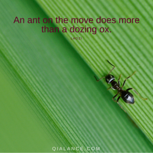 Laozi quote: ant on the move